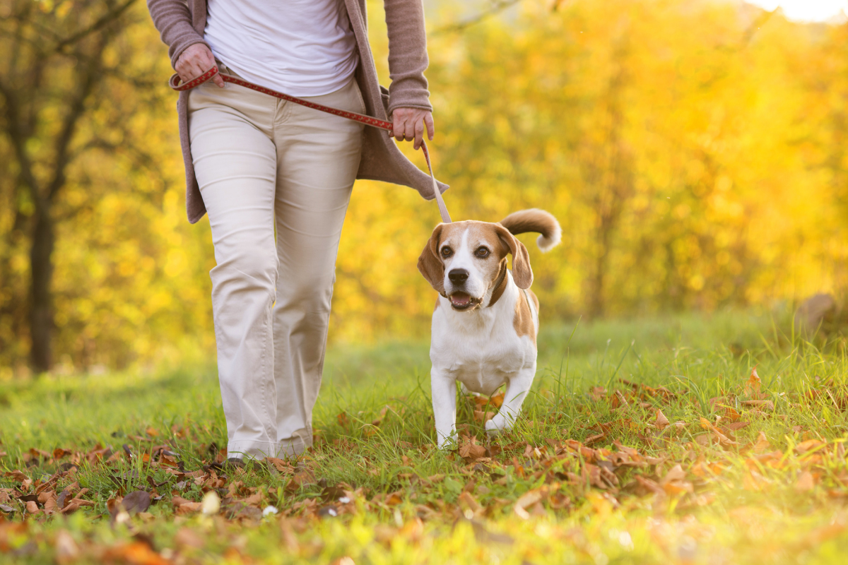 Dog friendly walking routes East Kilbride